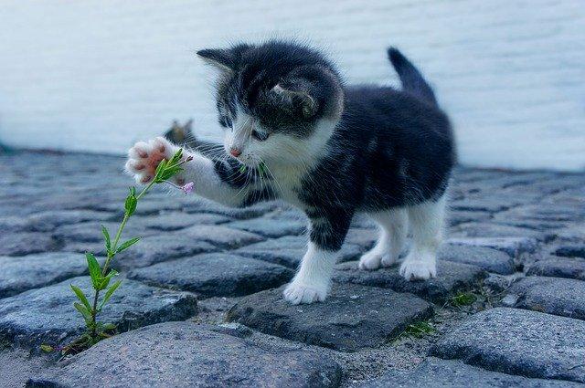 kotě hrající si rostlinou
